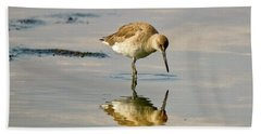 Willet Sees Its Reflection Beach Sheet