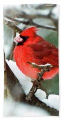 Winter Red Bird - Male Northern Cardinal With A Snow Beak Beach Towel