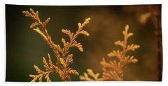 Winter's Hedges Beach Sheet