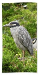 Beach Towel featuring the photograph Yellow-crowned Night Heron by Kristia Adams