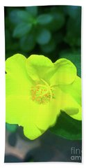 Yellow Hypericum - St Johns Wort Beach Sheet