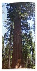 Yosemite National Park Mariposa Grove Giant Ancient Trees View Beach Sheet
