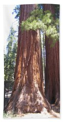 Yosemite National Park Mariposa Grove Twin Giant Ancient Trees Beach Sheet