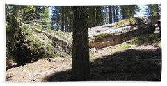 Yosemite National Park Mariposa Tall Trees Burnt Trees Beach Sheet