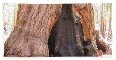 Yosemite National Park Walk Thru Tree Mariposa Grove Giant Beach Sheet