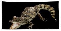 Young Cayman Crocodile, Reptile With Opened Mouth And Waved Tail Isolated On Black Background In Top Beach Towel