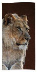 Young Male Lion Portrait Beach Towel
