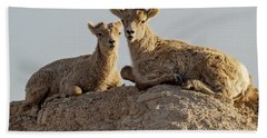 Young Mountain Sheep In Badlands National Park Beach Towel