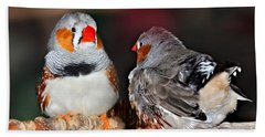Zebra Finch .. Australia  Beach Sheet
