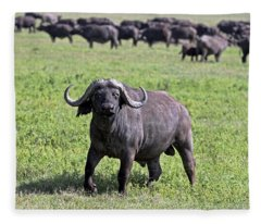 African Buffalo On Guard Fleece Blanket