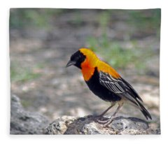 Black Bishop Weaver  Fleece Blanket