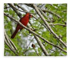 Cardinal Saturday Morning Fleece Blanket