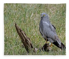 Montagu's Harrier Fleece Blanket