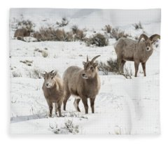 A Family Affair Fleece Blanket