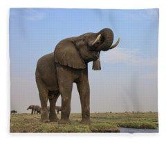African Elephant Drinking Chobe River Fleece Blanket