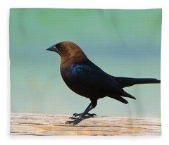 Brown-headed Cowbird Fleece Blanket