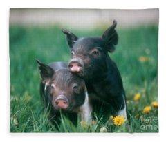 Piglet Fleece Blankets
