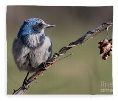 Florida Scrub Jay Fleece Blanket