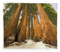 Giant Sequoias Sequoia N P Fleece Blanket