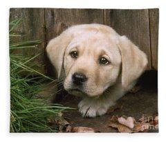 Labrador Puppy Fleece Blanket