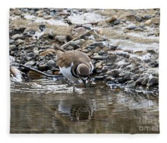 Killdeer Fleece Blankets