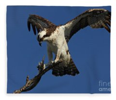 Osprey With A Fish Photo Fleece Blanket