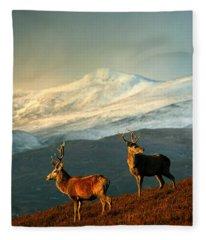 Red Deer Stags Fleece Blanket