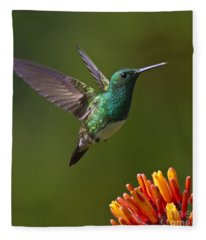 Snowy-bellied Hummingbird Fleece Blanket