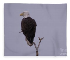 Solo  Bald Eagle Fleece Blanket