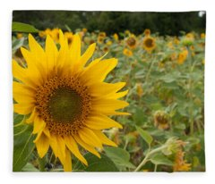 Sun Flower Fields Fleece Blanket