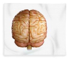 Brainstem Fleece Blankets