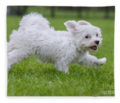 110801p130 Fleece Blanket