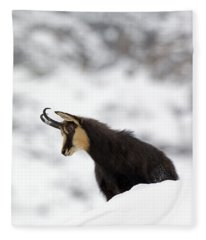 130201p229 Fleece Blanket