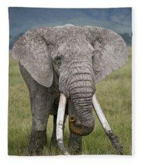 African Elephant Loxodonta Africana Fleece Blanket