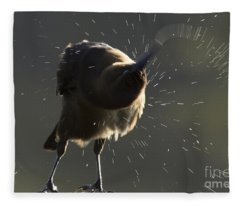 Boat Tailed Grackle Fleece Blanket
