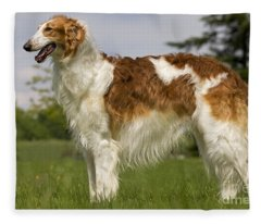 Borzoi Or Russian Wolfhound Fleece Blanket