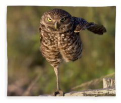 Burrowing Owl Photograph Fleece Blanket