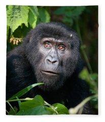 Gorilla Beringei Photographs Fleece Blankets