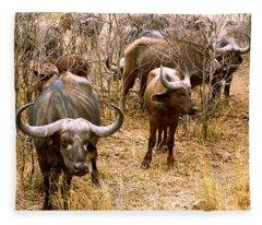 Herd Of Cape Buffaloes Syncerus Caffer Fleece Blanket