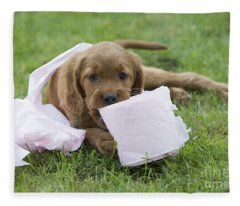 Irish Setter Puppy Fleece Blanket