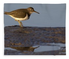 Spotted Sandpiper Reflection Fleece Blanket