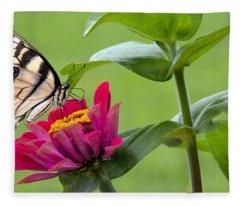 Tiger Swallowtail Butterfly On Zinnia Fleece Blanket