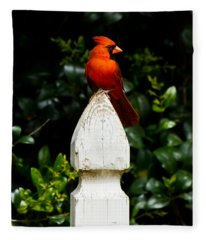 Male Cardinal Fleece Blanket