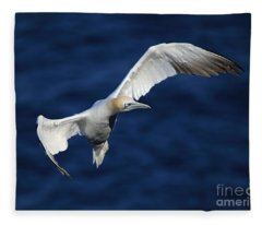 Northern Gannet In Flight Fleece Blanket