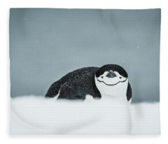 Chinstrap Penguin  Pygoscelis Fleece Blanket