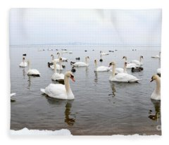 60 Swans A Swimming Fleece Blanket