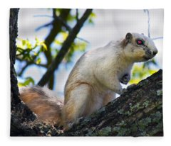 A Fox Squirrel Poses Fleece Blanket