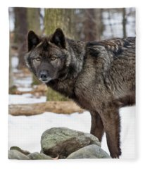 A Wolf's Intense Focus Fleece Blanket