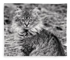 A Young Maine Coon Fleece Blanket