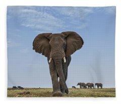 African Elephant Female On Defensive Fleece Blanket
